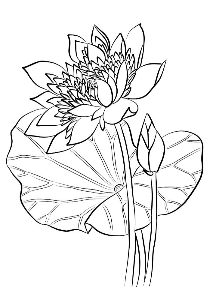 Tranh tô màu hoa sen dành cho bé