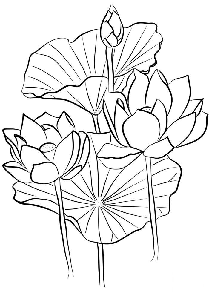 Tranh tô màu hoa sen nghệ thuật