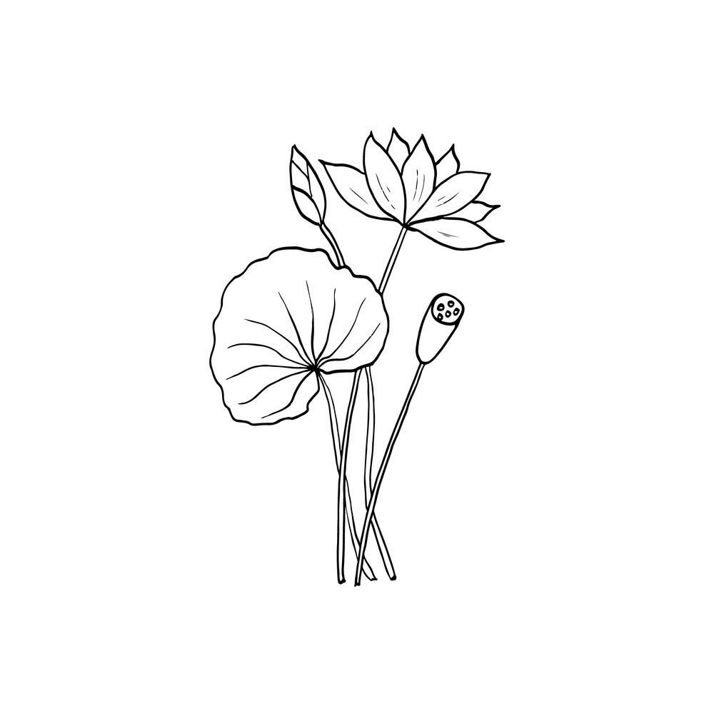 Tranh tô màu hoa sen nhỏ