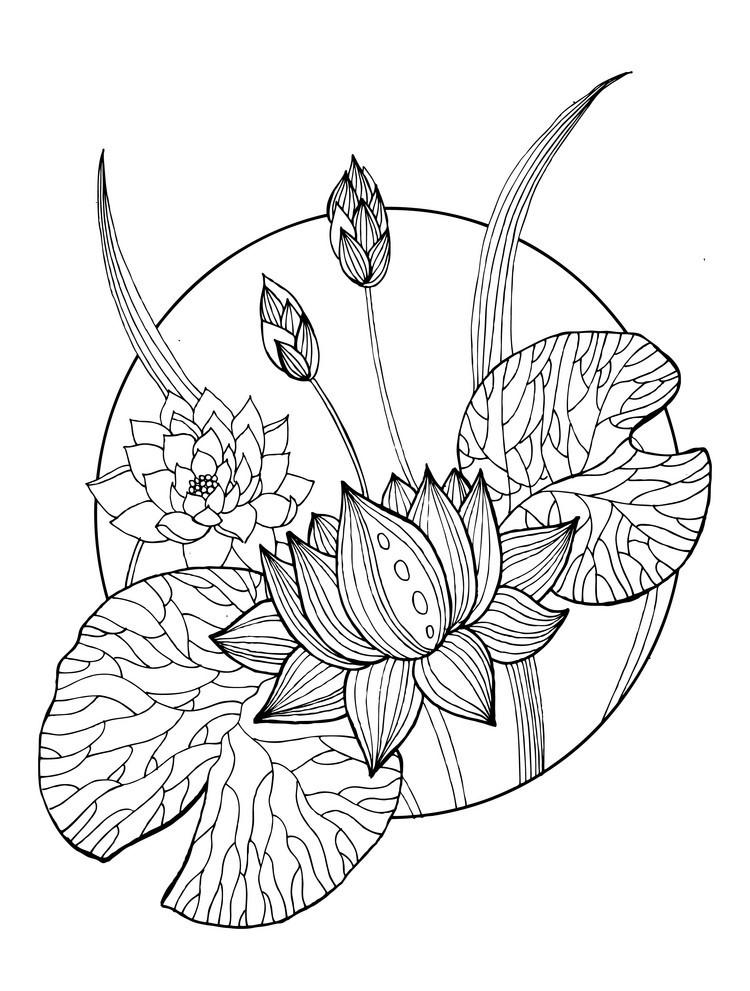 Tranh tô màu hoa sen trang trí