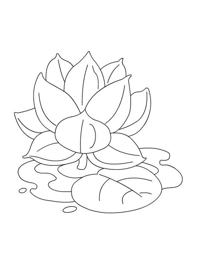 Tranh tô màu hoa sen trên hồ