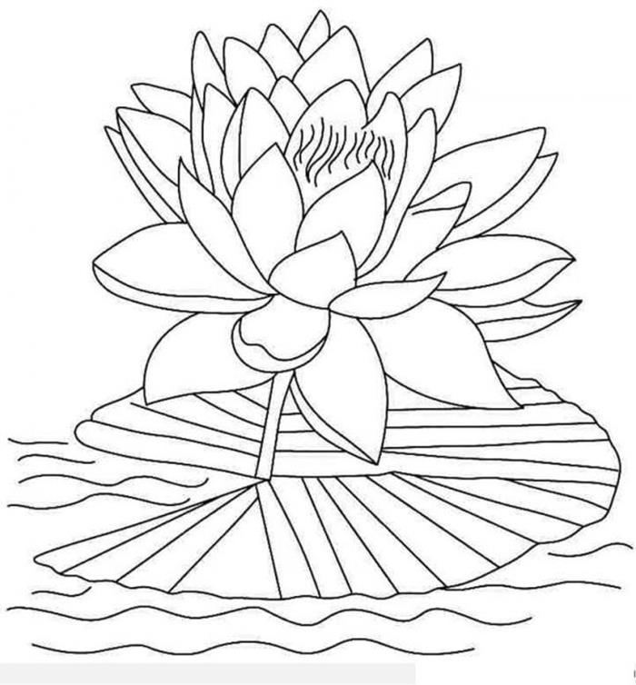 Tranh tô màu hoa sen trên nước