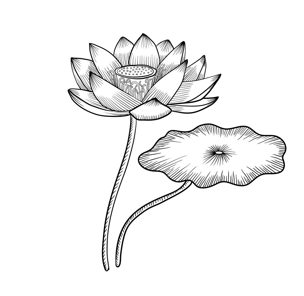 Tranh tô màu hoa sen và lá