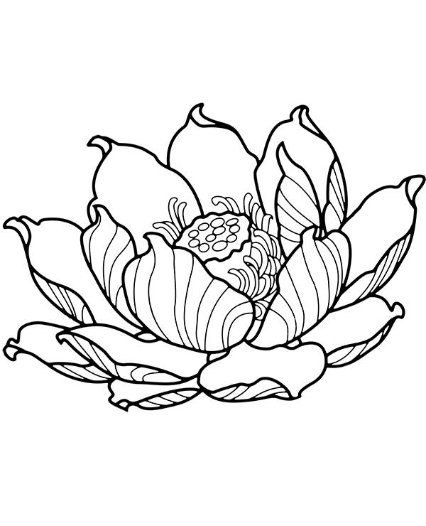 Tranh tô màu hoa sen và nhuỵ