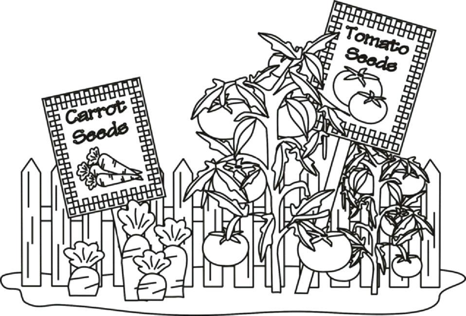 Tranh tô màu khu vườn cà rốt