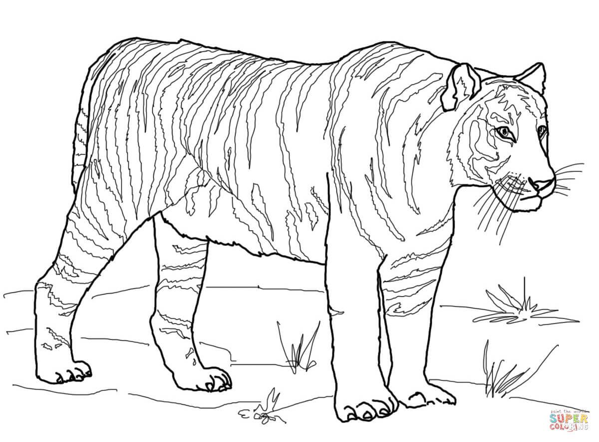 Tranh tô màu một con hổ cụp đuôi