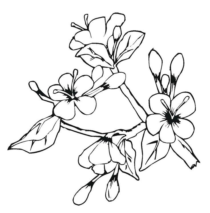 Tranh tô màu những bông hoa đào