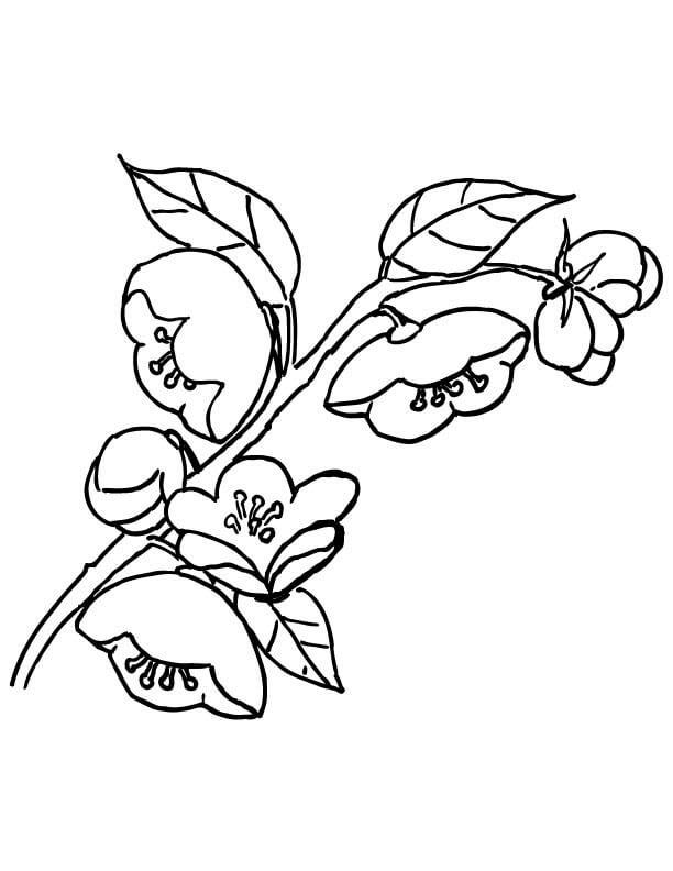 Tranh tô màu những cánh hoa đào