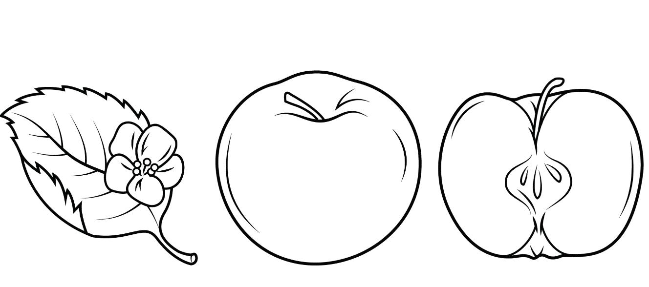 Tranh tô màu quả táo cây