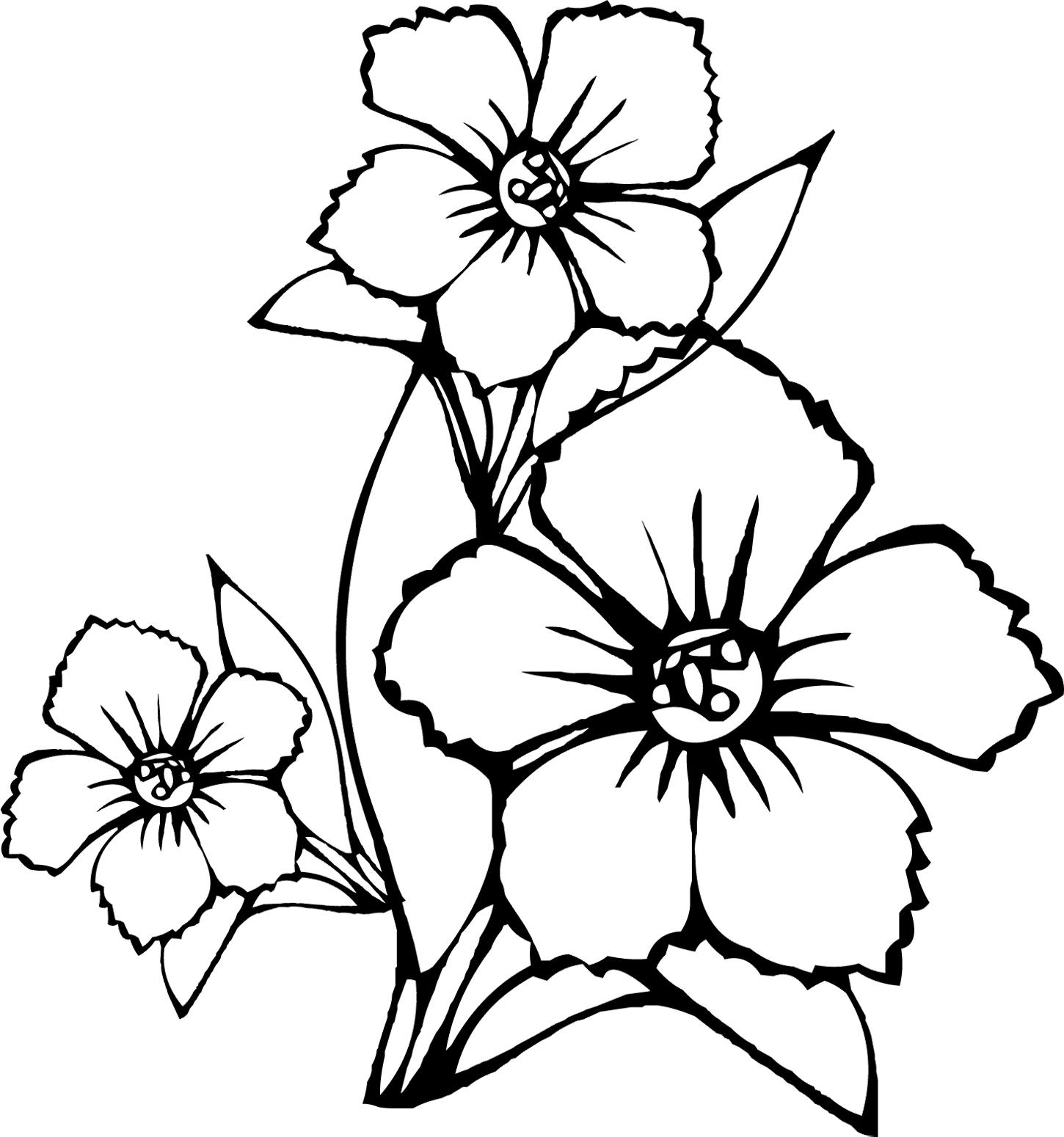 Tranh tô màu về hoa đào