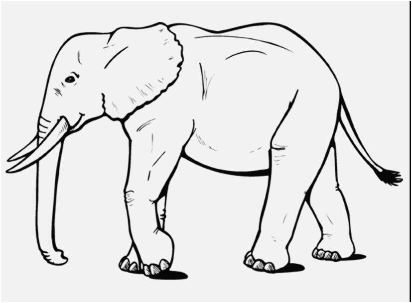 Tranh tô màu voi chân dài cực đẹp