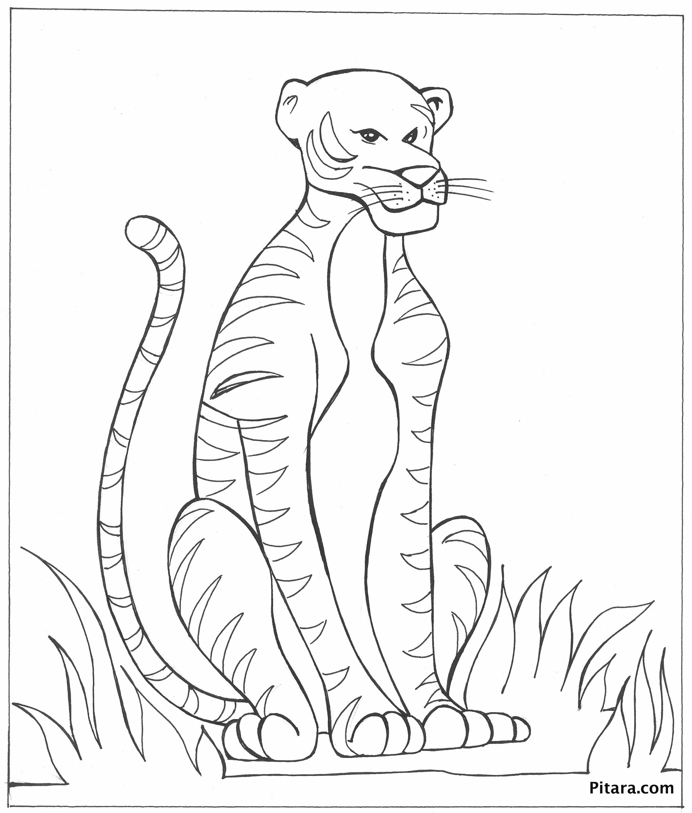 Tranh tô màu với con hổ có khuôn mặt khá bỉ ổi