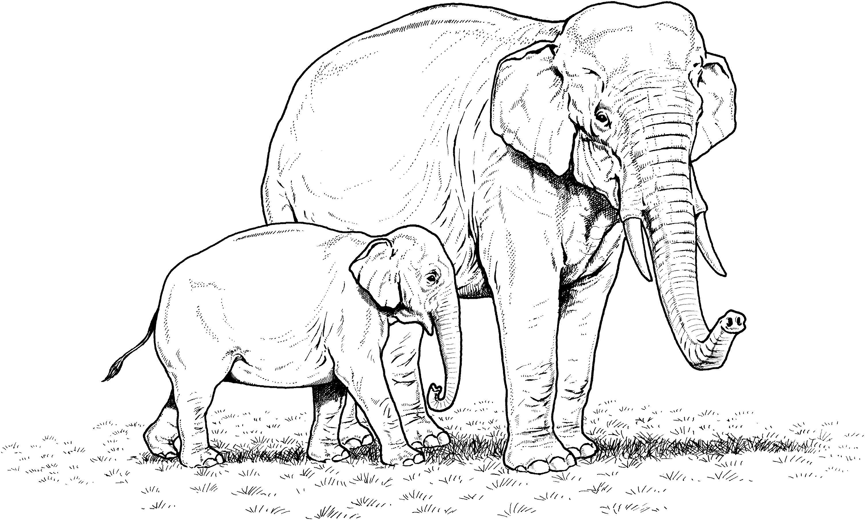 Tranh tô màu voi lớn voi bé rất đẹp