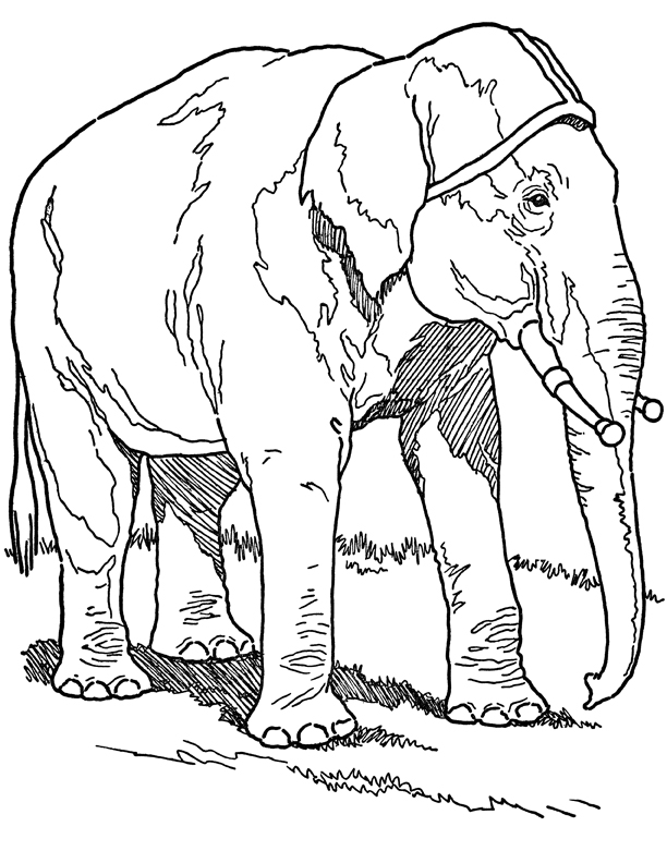 Tranh tô màu voi rất to rất đẹp
