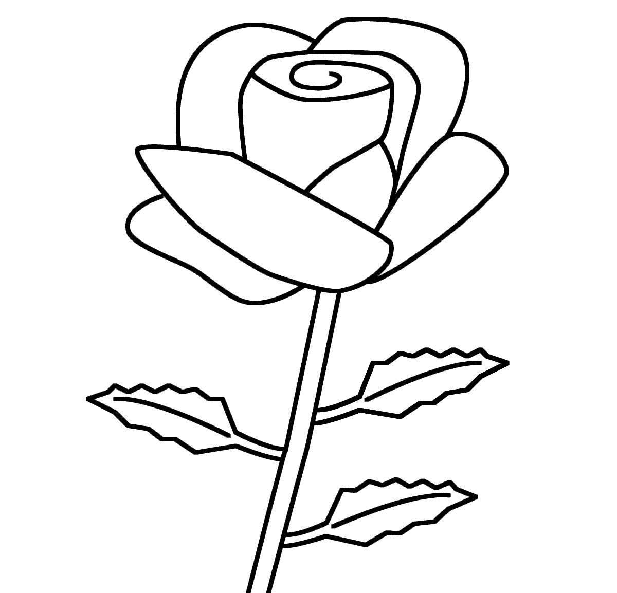 Tranh vẽ tô màu hoa hồng cho bé tập tô màu